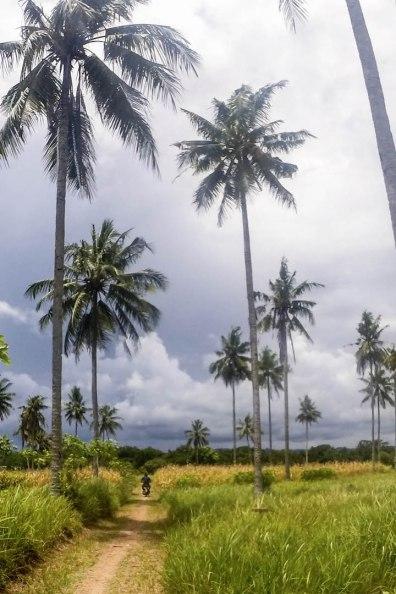 Mit dem Roller durch Reisfelder