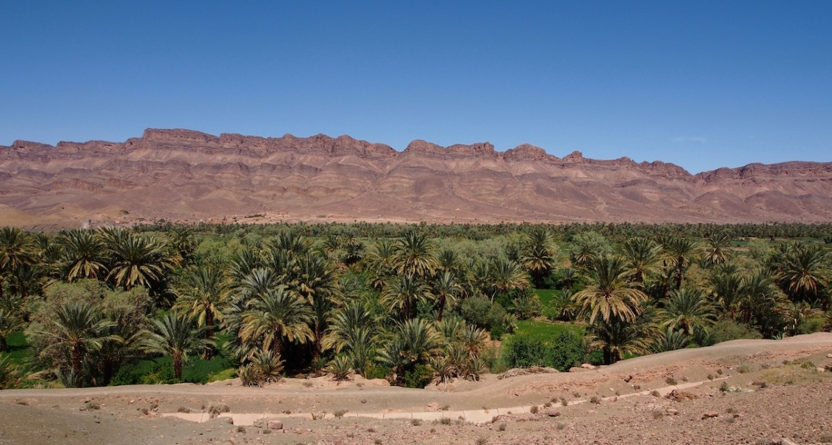 Palmen inmitten der Wüste