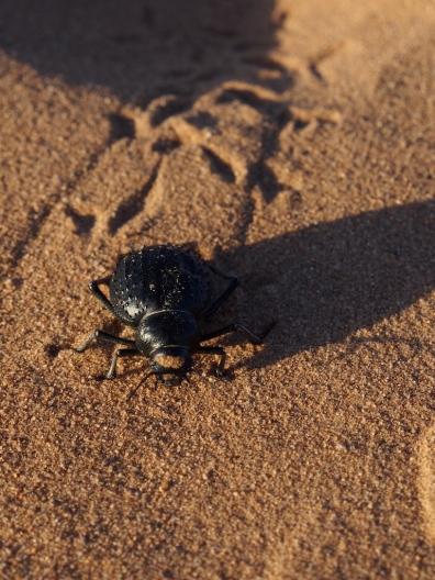 Käfer im Sand