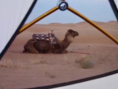 Kamel vor dem Zelt