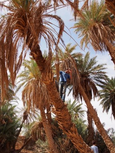 Rajid in den Palmen