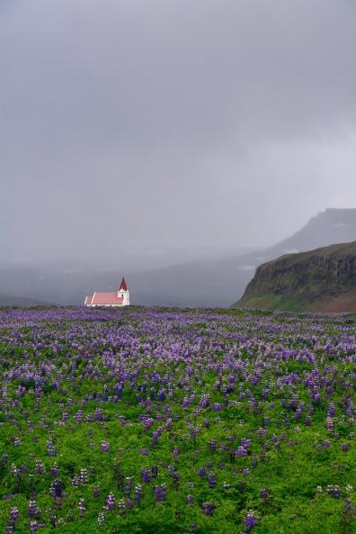 Kirche inmitten von Blumen