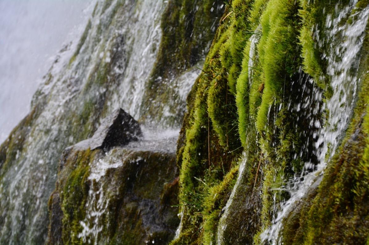 Moos und Wasser