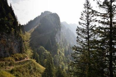 Wunderschöner Wanderweg durch den Wald